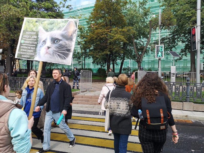 Суд оштрафовал москвичку на 15 тысяч рублей за плакат о пристройстве котят